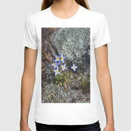 Thyme Leaved Bluets #2 T-shirt