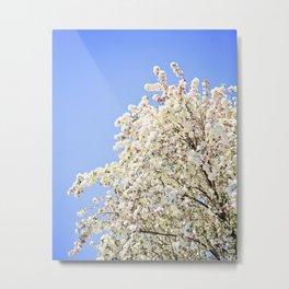 White Cherry Blossoms Against Blue Sky Metal Print