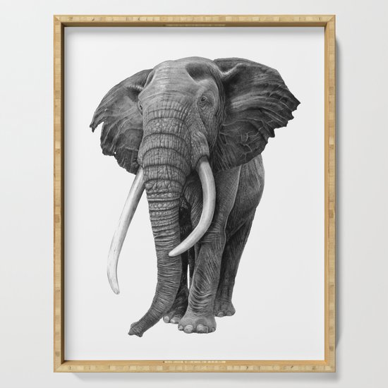 Bull elephant - Drawing in pencil by sean-fleming