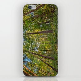 Muir Woods iPhone Skin