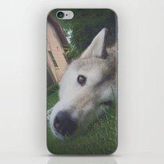 Husky 1 iPhone & iPod Skin