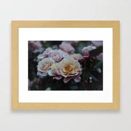 Dusk Rose Framed Art Print