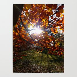 luce autunnale Poster