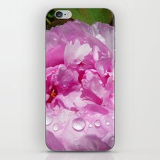 Pink Peony with Rain Drops iPhone & iPod Skin