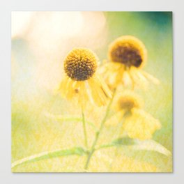 Sunshiny Canvas Print