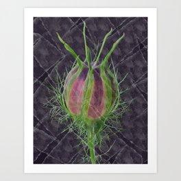 Nigella damascena - the ragged lady Art Print