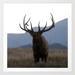 Watercolor Elk Bull 49, Estes Park, Colorado, Dusk Art Print