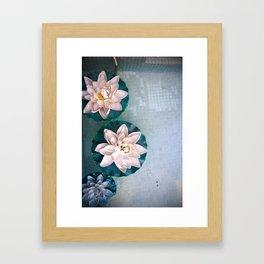 Other Flowers on the Pond Framed Art Print