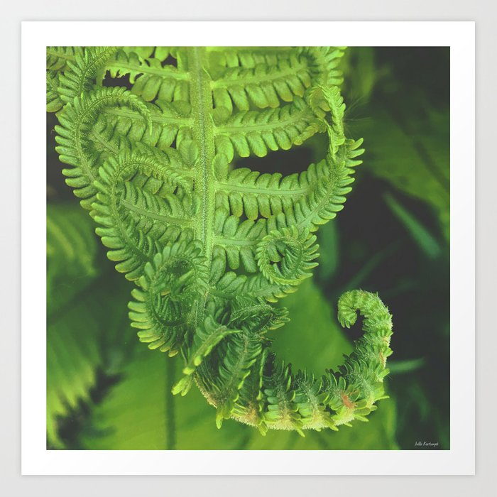 finishing fern series Art Print