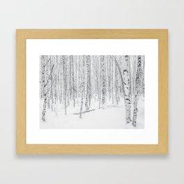 Swedish Birch Trees Framed Art Print