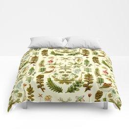 Ernst Haeckel - Hepaticae Comforters