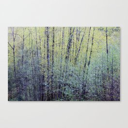 Spring Forest Trees2 Canvas Print