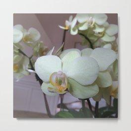 Orchid - 2014 Metal Print