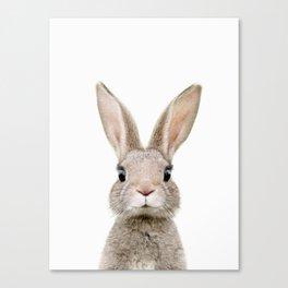 Baby Rabbit Portrait Canvas Print