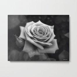 Pink Roses in Anzures 4 B&W Metal Print
