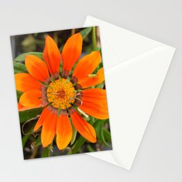 Almost Gone Stationery Cards
