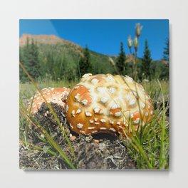 Watercolor Fungus, Fly Agaric 03, Lost Creek Wilderness, Colorado Metal Print