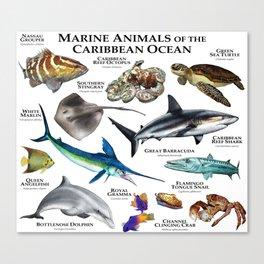 Marine Animals of the Caribbean Ocean Canvas Print