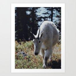 Friendly Mountain Goat Art Print