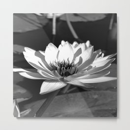 Waterlily Metal Print