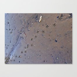 Bird Tracks in Mud at Low Tide Below the Casco Bay Bridge (1) Canvas Print