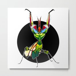 Devil's Flower Mantis (Idolomantis diabolica)  |  BUGSPOTTING SERIES Metal Print
