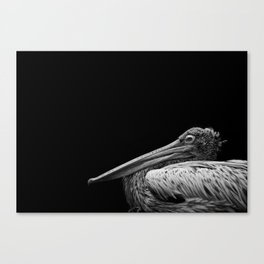 Captain Beaky Canvas Print