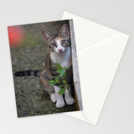 Little Liza the cat Stationery Cards
