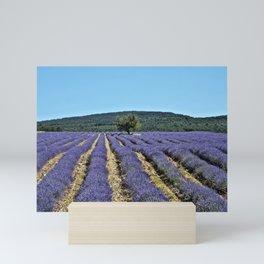 Lavender field, Provence, France Mini Art Print