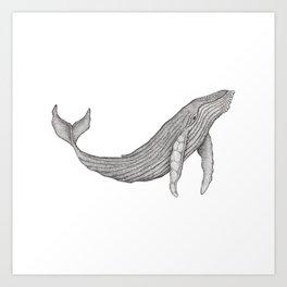 Megaptera Novaeangliae [Ted] Art Print