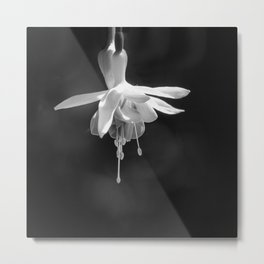 Fuschia in Black and White Metal Print