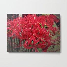 Flower_39 Metal Print