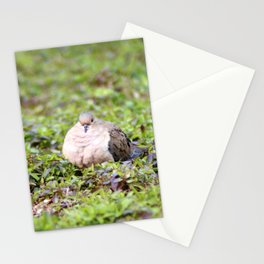 Mourning Dove Stare Stationery Cards