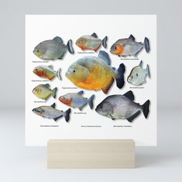 Piranha family Mini Art Print