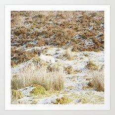 Under the Winter's Sun Art Print