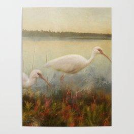 North Carolina Ibis Poster