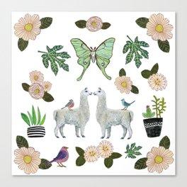 Llama and Luna Moth Canvas Print