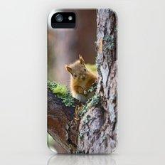 Baby Red Squirrel  Slim Case iPhone (5, 5s)