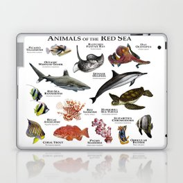 Animals of the Red Sea Laptop & iPad Skin