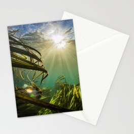 Through the Wild Stationery Cards