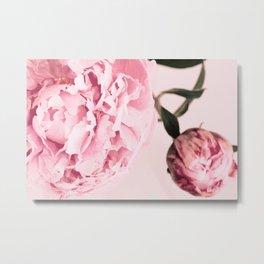 Fine Art Pastel Pink Peony Photography, Flower Metal Print