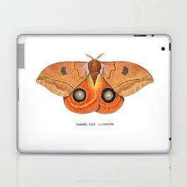 Randa's Eyed Silkmoth (Automeris randa) Laptop & iPad Skin