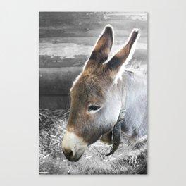 L'âne Canvas Print