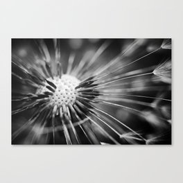 all those little pieces Canvas Print