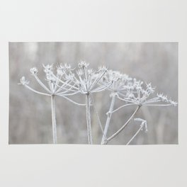 cow parsley plant  with hoarfrost in winter Rug