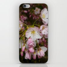 Pink and White Cherry Blossoms iPhone Skin