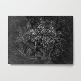 succulent plant with blooming flowers in black and white Metal Print