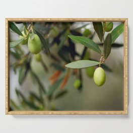 Olives On A Branch Serving Tray