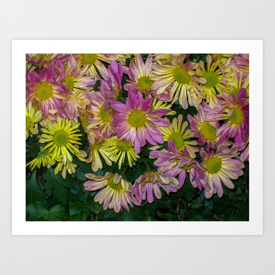 Flowers having a meeting Art Print