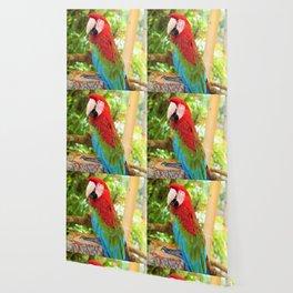 Catalina Macaw Wallpaper